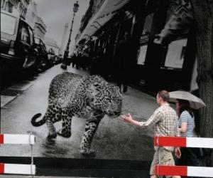 Atentie, leopard!
